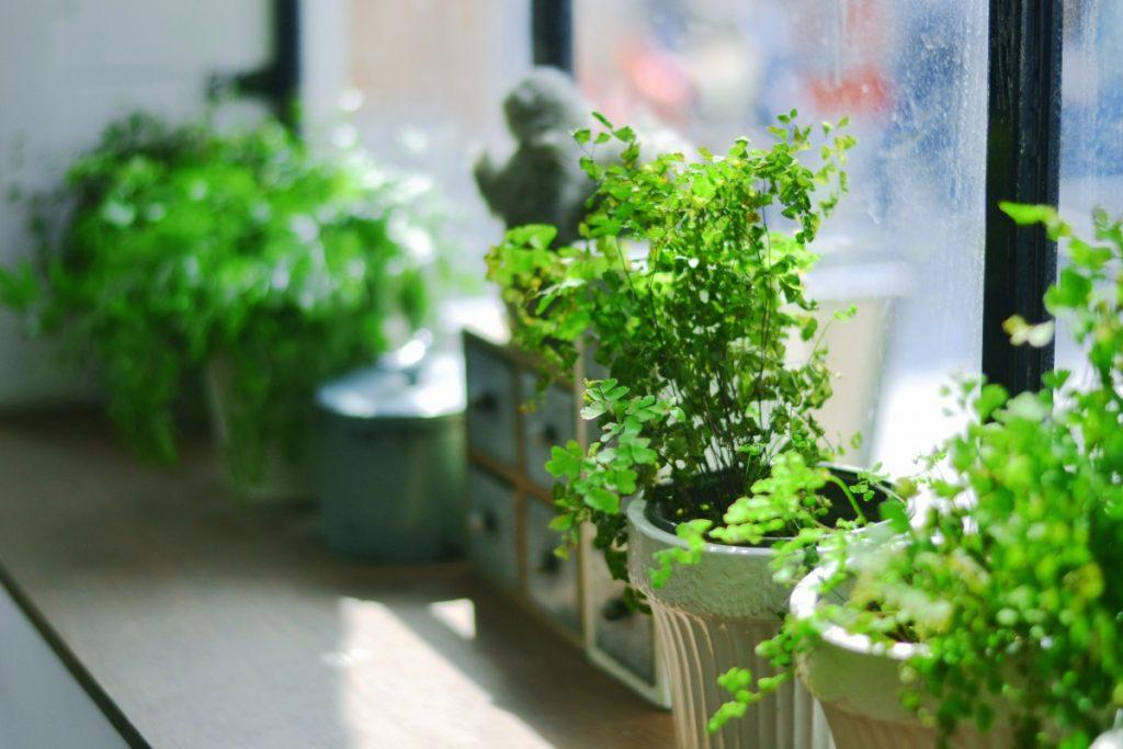 Végétaliser son petit studio